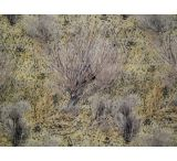 Remington Rem Wrap Adhesive Camouflage For Your Firearm Mossy Oak Brush 17355