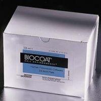 BD BioCoat Cellware, Fibronectin, BD Biosciences 354457 Culture Dishes 35 Mm