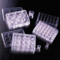 BD Falcon Cell Culture Inserts, Sterile, BD Biosciences 353090 Transparent Inserts