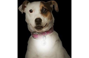 Nite Ize PetLit LED Collar Light, White LED - Jewel Pink PCL02-03-12JE