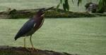 spotting scope bird